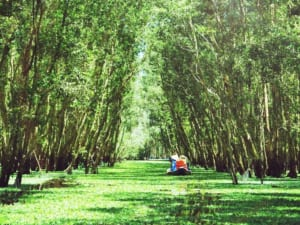 Bỏ túi ngay kinh nghiệm du lịch rừng tràm Trà Sư
