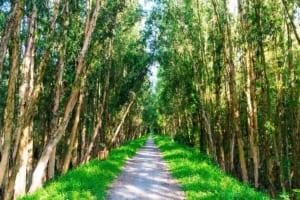 Gợi ý cho bạn lịch trình tour rừng tràm Trà Sư 2 ngày 1 đêm